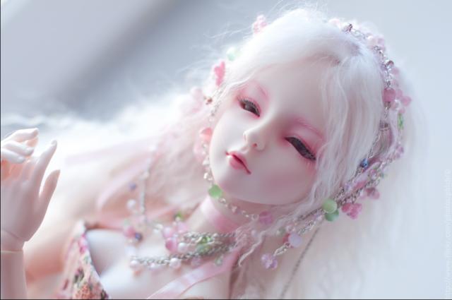 bup be bjd, búp bê bjd, ball jointed doll, bjd, bjd doll, búp bê khớp cầu, bup be khop cau, dod tender shall, dream of doll